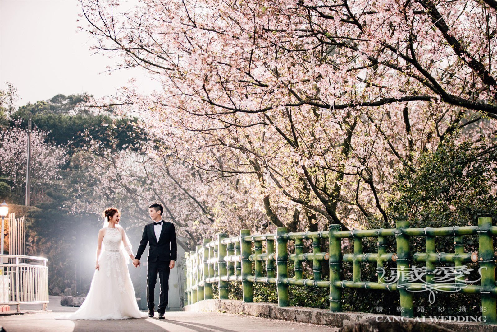 couples taking pre-wedding in cherry blossoms